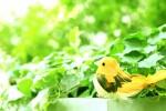 三井アウトレットパーク滋賀竜王で、ちょっと珍しい「カラフル・グリーンプランター」づくり♪自分だけのオリジナルプランターを作ろう!!