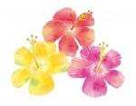 《7月6日・8月3日》親子でLet's リトミックダンス!草津市まちづくりセンターで「ハワイアンリトミック体験」が開催!事前申込制♪