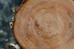 鮎の塩焼きや夏野菜BBQ、川遊びや木の皮むき体験を楽しみながら【8月5日】木の伐採見学と森の学習会