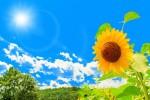 エコメニューを考えて温暖化問題を知ろう!「夏休み自由研究講座」です!☆要申込、参加無料、残席わずか
