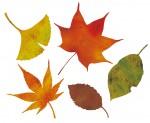 """秋の森でめいっぱい自然あそび!栗東自然観察の森で""""2018年 森の秋まつり""""が開催♪【10月21日】"""
