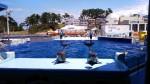 1000匹の魚たちが泳ぐ海水プールでじゃぶじゃぶ泳ごう♪【越前松島水族館】水着タオルを忘れずに!シャワー更衣室あり