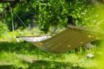 木登り自然体験「ツリーイング」で木と遊ぼう!空中のハンモックに揺られて日常を忘れ、癒されちゃいましょう