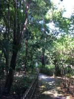 《8月12日》夏の森で昆虫を探そう!栗東自然観察の森で「親子観察会」が開催!参加無料、予約不要♪