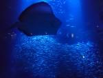 〈7月13日から〉夜の幻想的な水族館を楽しもう!京都水族館で「夜のすいぞくかん」開催!夜20時まで営業。