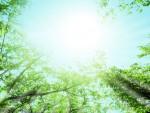 参加無料!蒸留器を使ってハーブウォーターを作れるよ♪【9月9日】季節の植物でアロマウォーターを作ろう!【琵琶湖博物館】