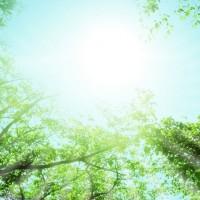 素材 青空とグリーン