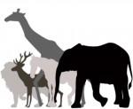 夜の動物園を楽しもう!【10月13・14日】阿鼻叫喚!妖怪ナイトat the zoo 2019【10月12日~14日】京都市動物園 秋の夜間開園