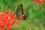 《9月23日》秋の公園で野外観察!草津市のロクハ公園で「昆虫ウォッチング」が開催!参加無料♪