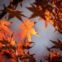 autumn-leaves-1415541_640