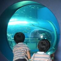 素材 琵琶湖博物館