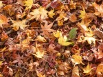 【11月17日】森の小道づくりときこりのろうそく体験!びわこ地球市民の森にて「のやまであそぼう」開催☆