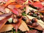 《11月25日(日)》森の素材を使ってクラフトしてみませんか?『ミニクラフト どんぐりコロコロカー』開催