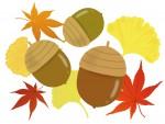 《11月24日》教科書には載っていない自然の魅力を学ぼう♪大津市のびわこ文化公園にて「しぜんとあそぼ in autumn」が開催!
