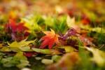 【11月24日】賞品ありのゲームを通して秋のロクハ公園を楽しもう!公園内にて「おちばの日」開催☆