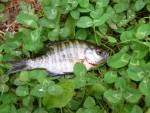 大好評の「クリーン運動」で外来魚釣りをして琵琶湖を綺麗にしよう!☆要申込、参加無料(釣竿無料貸出し)