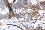 《12月16日(日)》親子で森の不思議を体感しよう!栗東自然観察の森『親子観察会』開催☆参加費無料