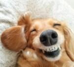 保護犬猫譲渡会や手作り雑貨の販売、キッチンカーのグルメを楽しもう♪【10月13日】びわ湖わんにゃんマルシェ