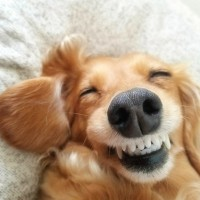 素材 笑う犬