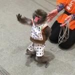 《2月3日》フォレオ大津一里山にて「猿まわし劇場」が開催!可愛いお猿さんのパフォーマンスを間近で楽しもう♪