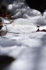 《2月10日(日)》親子で森の不思議を体感してみよう!『親子観察会』開催☆参加無料