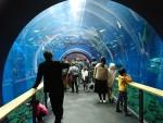進化し続けてる琵琶湖博物館に行って来ました♪ディスカバリールームは大人も子供も楽しめますよ!