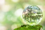 春到来!3月24日はびわこ地球市民の森にて「のやまであそぼう」開催☆自然の中で遊ぼう!シイタケの菌打ちもあるよ♪