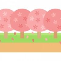 spring_sakura-namiki_9662-300x225