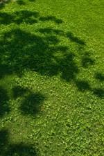 [4月28日]パークヨガ 野洲川親水公園の芝生の上でヨガ体験☆