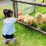 《5月8日》日野町の畜産技術振興センターにて「ひつじの毛刈り」が開催!ウサギや山羊とのふれあいもあり♪