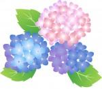 子連れOK♪折り紙で季節のお花あじさいを折ろう【5月27日】大人のための折り紙教室
