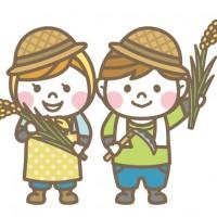 米 田んぼ 田植え 農家 稲