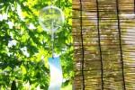 6月15日 滋賀県立大学 湖風夏祭りで「緑のカーテン栽培講習会」がおこなわれます!参加するとゴーヤの苗がもらえます♪参加無料