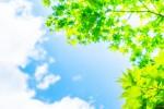 みんなで自然を感じながらフットパス♪森林公園くつきの森で「フットパス」が5月25日(土)開催!!