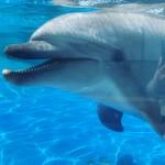 イルカとずぶ濡れ覚悟の水遊び!巨大ウォーターカーテンも登場!夏限定アトラクション「BASSHAAAAN!!」は7月13日~9月1日〈京都水族館〉