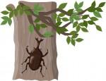 《7月20日》カブトムシたちの熱いバトルを見届けよう!栗東自然観察の森で「カブトムシ運動会」が開催!参加無料♪