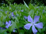 【草津市】琵琶湖博物館に生えている季節の植物を使って、アロマウォーターを作ろう!2019年9月4日(水)