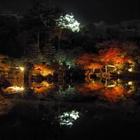 彦根城 夜 ライトアップ