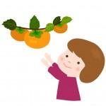 栄養たっぷりの美味しい柿が食べ放題!竜王町の道の駅アグリパーク竜王で「柿狩り」が開園中!