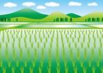 家族で里山の環境学習★棚田の田植え、稲刈り、鮒放流体験を通して身近な環境について考えよう!全4回【大津市真野】