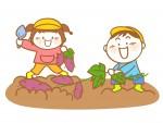 美味しいサツマイモを育てて食べよう!イモ掘り体験オーナー募集中!【東近江市】