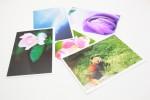 写真の整理におすすめ!FUJIFILM最高級プロペーパー使用でL版16円!『vivipri』今ならポイント20倍!