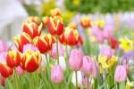 【開園延期になりました(4/9追記)】《4月11日〜》冬季休園中の「ガーデンミュージアム比叡」が開園!絶景の比叡山頂で春を感じよう!オープニングプレゼントもあり♪
