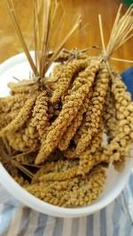 【食を学ぶ・知る】雑穀でおいしく元気に!雑穀の魅力教えてもらいました♪