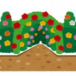 《三重県》9月23日~10月23日・なばなの里にて『ダリア・コスモスまつり』開催♪