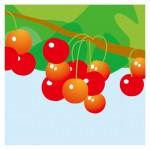 マキノピックランドで「さくらんぼ園」が開園中!甘いさくらんぼが30分食べ放題♪
