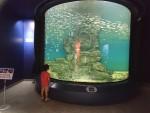 6月2日より再開した琵琶湖博物館に行ってきました♪