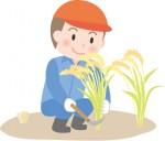 <9/6>琵琶湖博物館 生活実験工房にて『稲刈り・ハサ掛け作業』が体験できます。参加無料☆