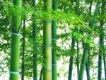 <8/29>高島市『新竹取物語~夏の祭典~』が開催されます!高島の自然を五感で楽しもう☆