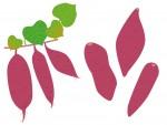 10月の土日も「びわ湖こどもの国」で芋掘り体験ができるよ!秋を思いっきり楽しもう!【高島市】